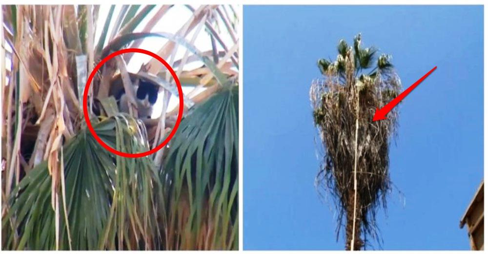 rescate-gato-palmera-20-metros