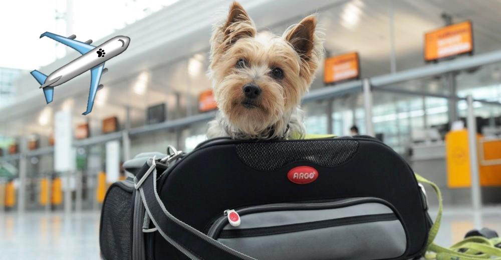 tips-para-viaje-con-mascotas-avion