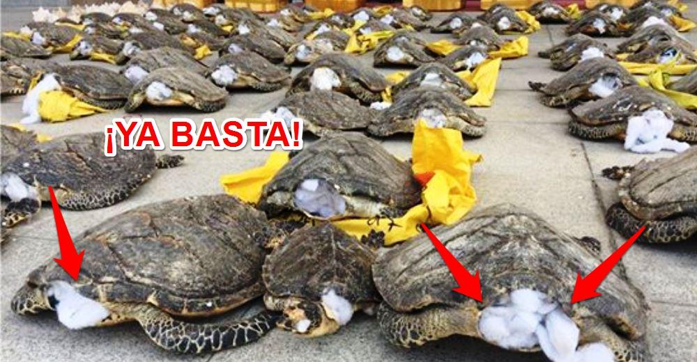 tortugas-rescatadas
