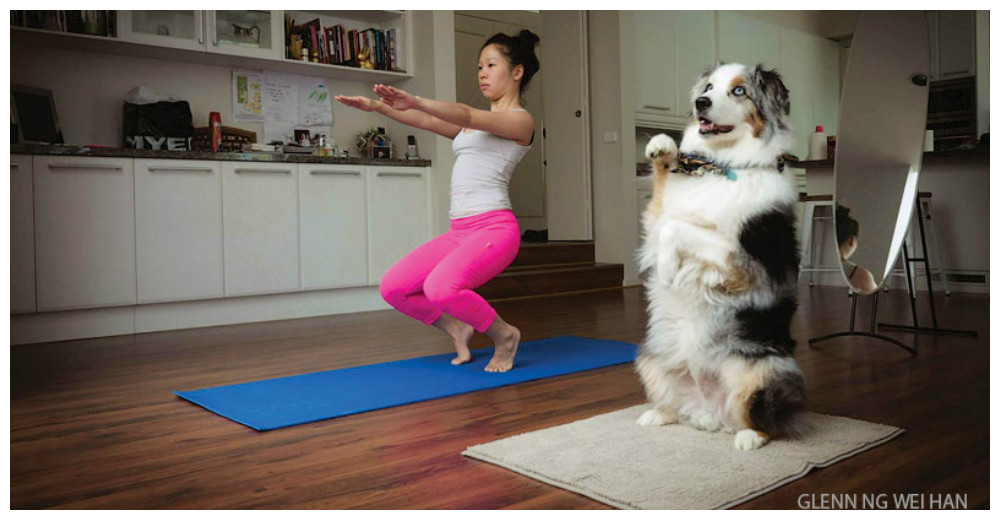 5-fotos-animales-con-yoguis-portada