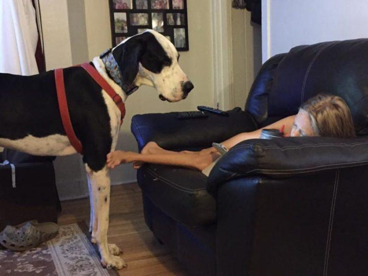 bella-burton-puede-andar-gracias-a-la-ayuda-de-su-perro-y-gran-amigo-george-1