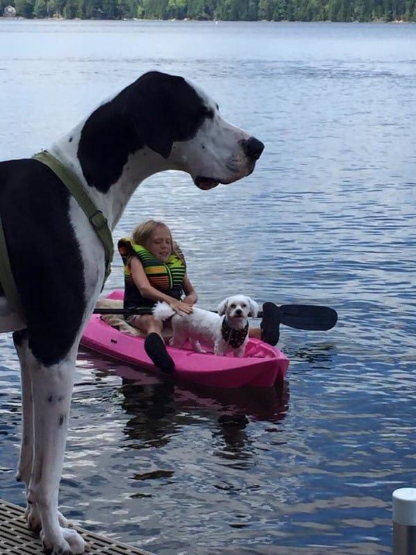 bella-burton-puede-andar-gracias-a-la-ayuda-de-su-perro-y-gran-amigo-george-12