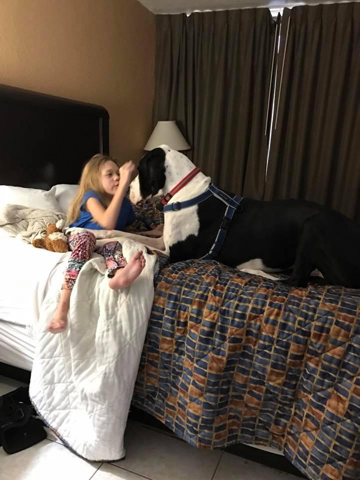 bella-burton-puede-andar-gracias-a-la-ayuda-de-su-perro-y-gran-amigo-george-3