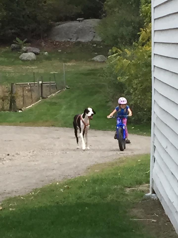 bella-burton-puede-andar-gracias-a-la-ayuda-de-su-perro-y-gran-amigo-george-4