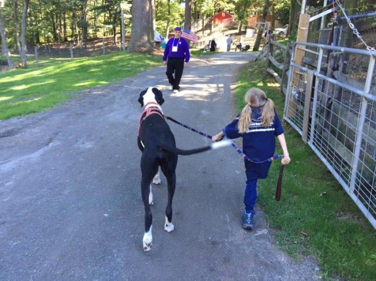 bella-burton-puede-andar-gracias-a-la-ayuda-de-su-perro-y-gran-amigo-george-8