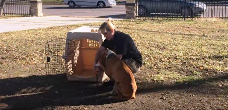 besos-de-un-perro-encadenado-9