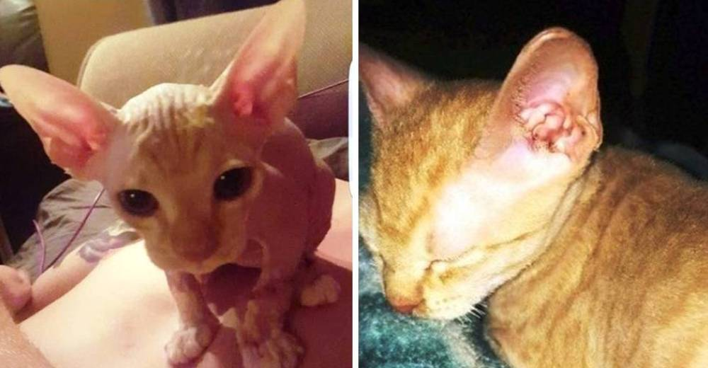 gatos-vendidos-en-linea-protector