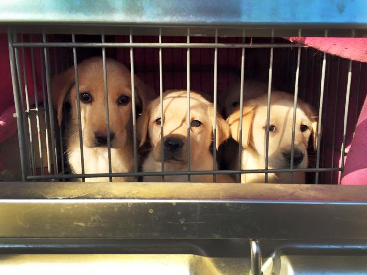 marc-ching-hombre-lucha-contra-maltrato-perros-asia-11