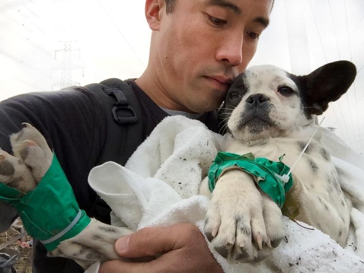 marc-ching-hombre-lucha-contra-maltrato-perros-asia-16