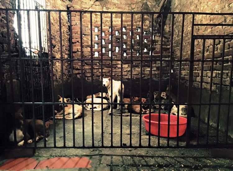 marc-ching-hombre-lucha-contra-maltrato-perros-asia-2