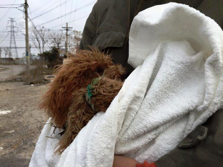 marc-ching-hombre-lucha-contra-maltrato-perros-asia-24