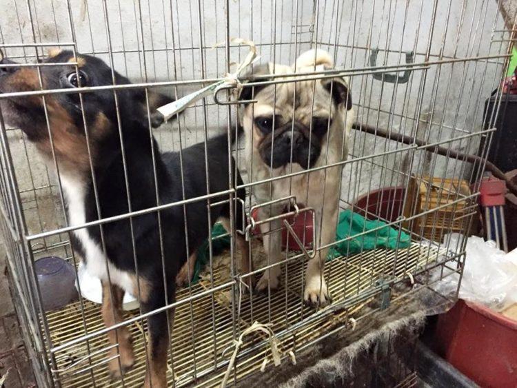 marc-ching-hombre-lucha-contra-maltrato-perros-asia-28
