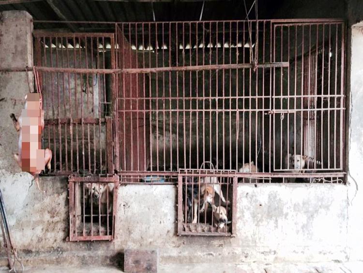 marc-ching-hombre-lucha-contra-maltrato-perros-asia-30