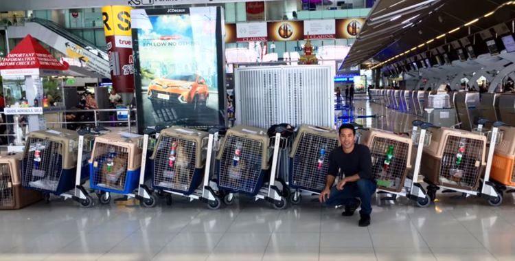 marc-ching-hombre-lucha-contra-maltrato-perros-asia-7