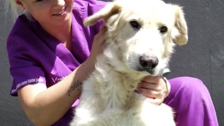 Milagrosa-recuperacion-perro-Merlin 09
