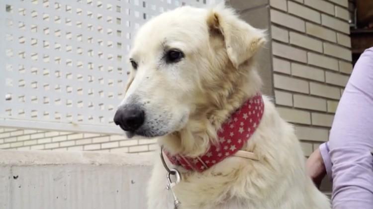 Milagrosa-recuperacion-perro-Merlin 10