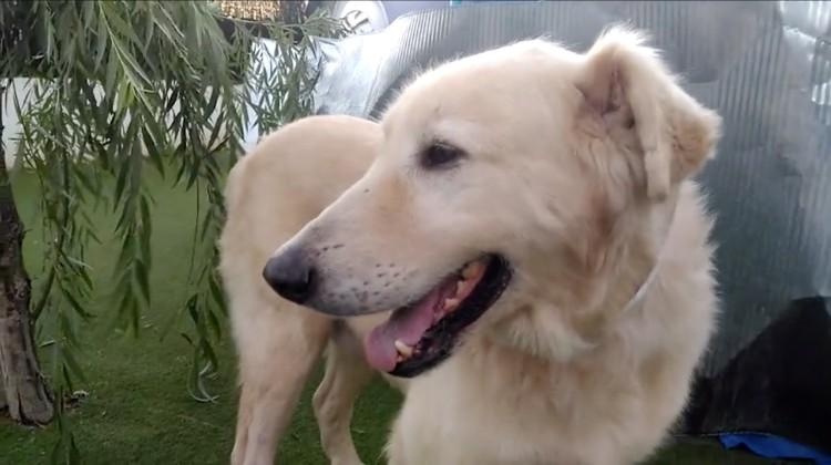 Milagrosa-recuperacion-perro-Merlin 11