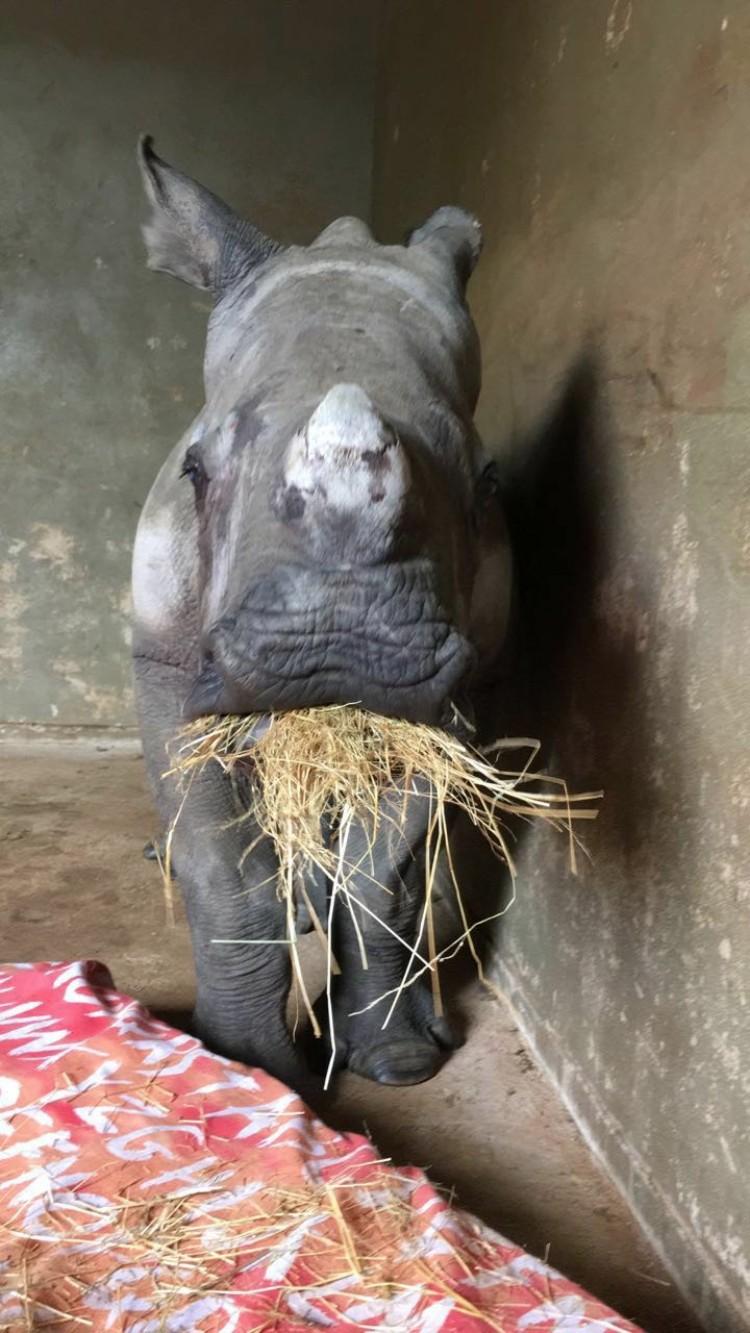 nandi-rinoceronte-rescatado-jamie-cuidadora-01
