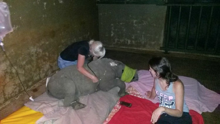 nandi-rinoceronte-rescatado-jamie-cuidadora-04