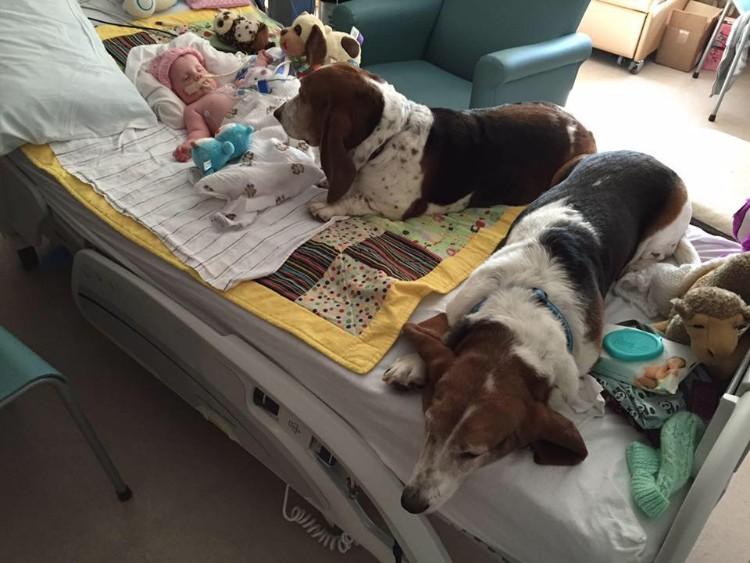 nora-bebe-6-meses-perros-gracie-grumpy-02