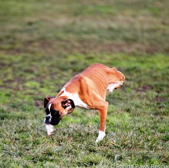 perrito-sin-patas-traseras-9
