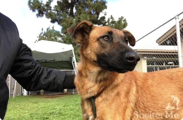 perro-del-refugio-no-esta-feliz-2