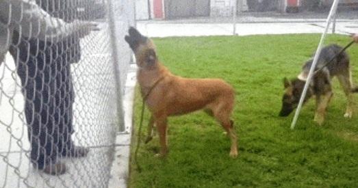 perro-del-refugio-no-esta-feliz-3
