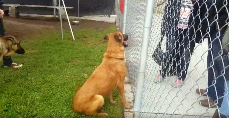perro-del-refugio-no-esta-feliz-4