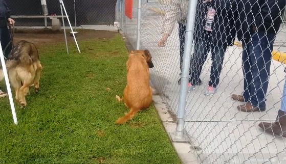 perro-del-refugio-no-esta-feliz-6