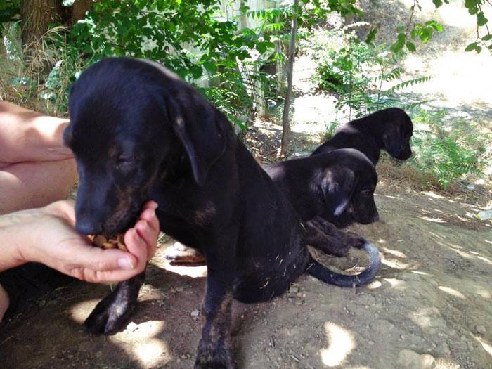 perros-crecen-juntos-los-separan-luego-el-destino-los-une-en-el-mismo-hogar-1