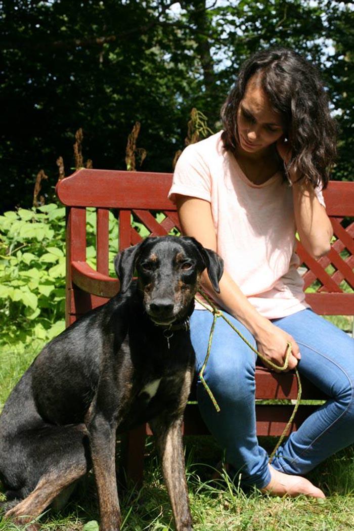 perros-crecen-juntos-los-separan-luego-el-destino-los-une-en-el-mismo-hogar-3