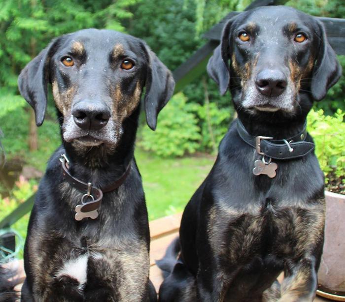 perros-crecen-juntos-los-separan-luego-el-destino-los-une-en-el-mismo-hogar-4