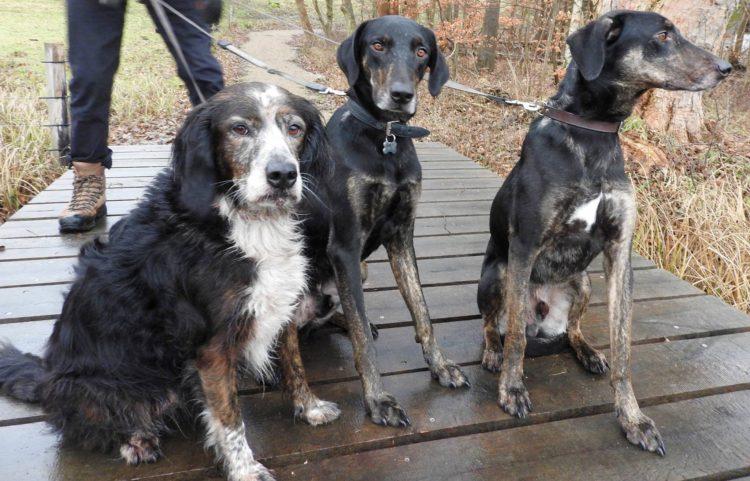 perros-crecen-juntos-los-separan-luego-el-destino-los-une-en-el-mismo-hogar-8