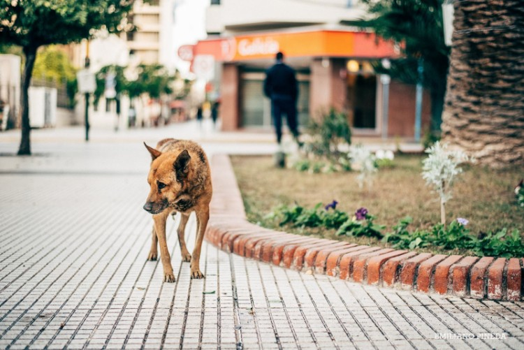 raul-perro-casa-gobierno-la-rioja-argentina-02