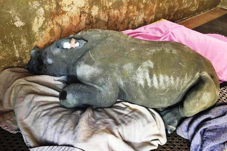 rinoceronte-con-una-gran-actitud-1