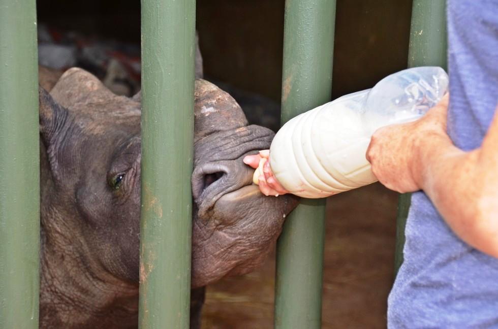 rinoceronte-con-una-gran-actitud-3