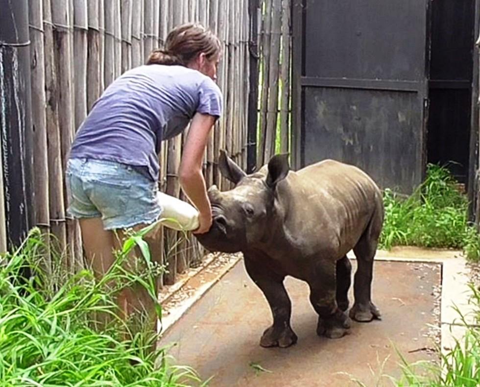 rinoceronte-con-una-gran-actitud-4