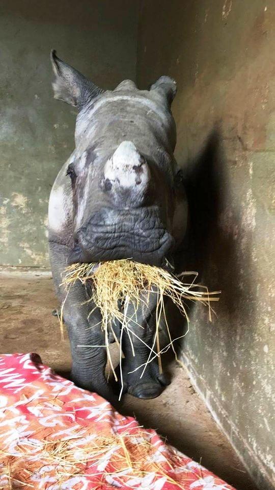 rinoceronte-con-una-gran-actitud-5