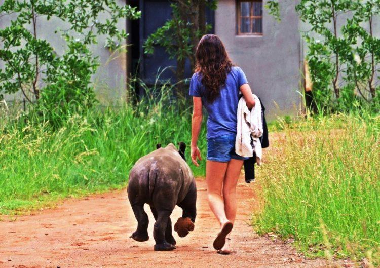 rinoceronte-con-una-gran-actitud-9