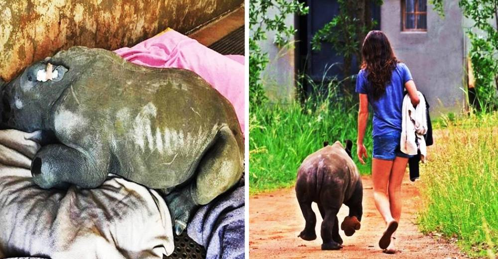 rinoceronte-con-una-gran-actitud-portada