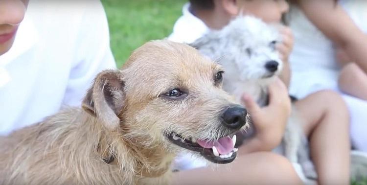 su-perro-aparecio-despues-de-6-anos-pero-no-estaba-solo-y-su-familia-adopto-a-su-amigo-3