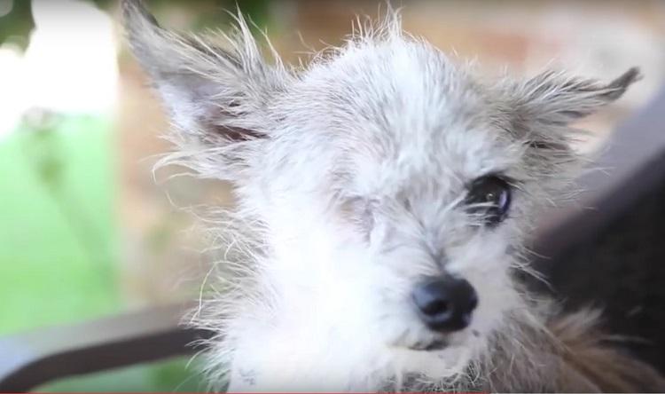 su-perro-aparecio-despues-de-6-anos-pero-no-estaba-solo-y-su-familia-adopto-a-su-amigo-5
