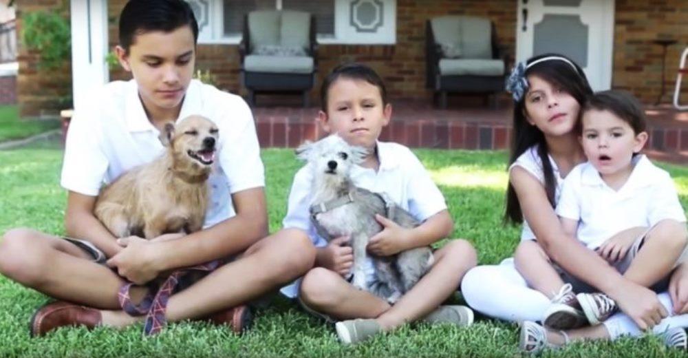 su-perro-aparecio-despues-de-6-anos-pero-no-estaba-solo-y-su-familia-adopto-a-su-amigo-6-750x381