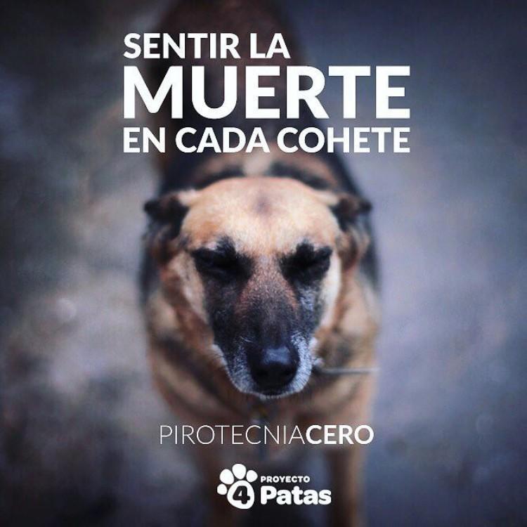 video-pirotecnia-proyecto-4-patas-01