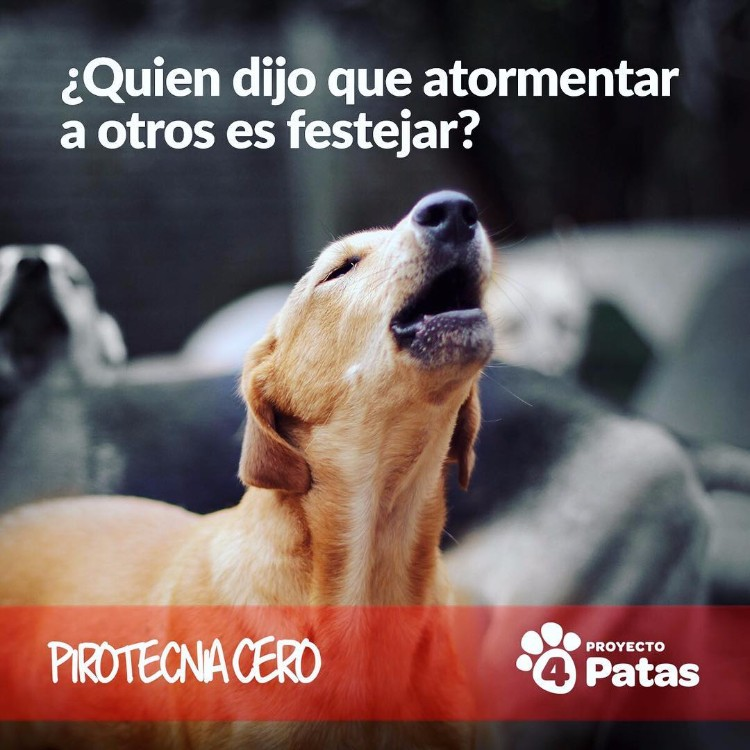video-pirotecnia-proyecto-4-patas-02