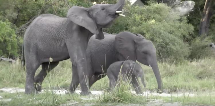 censo-elefantes3