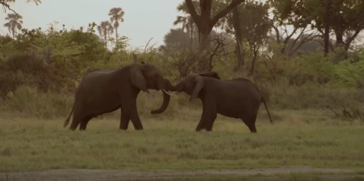 censo-elefantes4