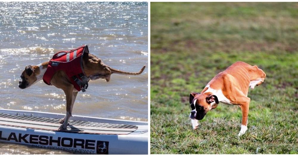 duncan-perro-rescatado-dos-patas
