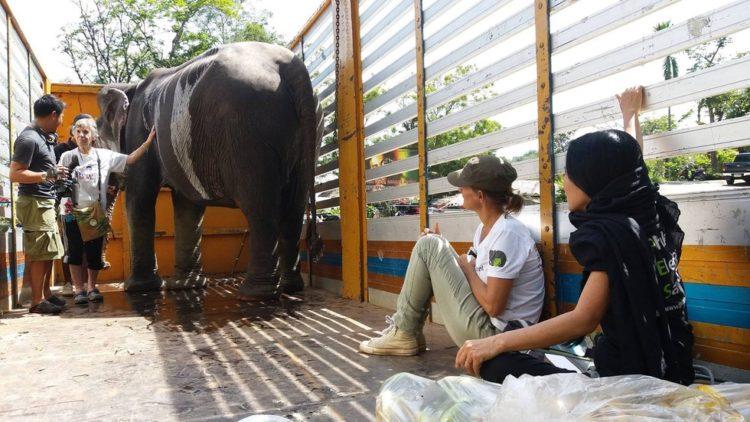 elefante-ciega-1