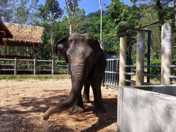 elefante-ciega-10